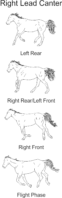 Illustrations of horse cantering