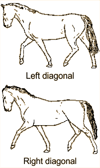 Illustrations of horse trotting
