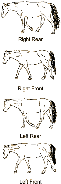 Illustrations of horse walking